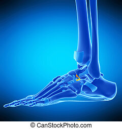 the bifurcate ligament