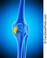 the medial patellar ligament