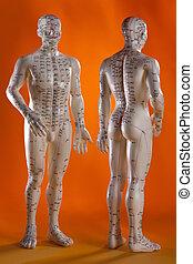 medicina, acupuntura, alternativa, -, modelo
