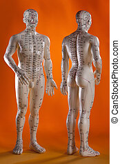 medicina, agopuntura, alternativa, -, modello