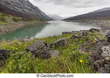 medicina, lago, -, jasper parco nazionale
