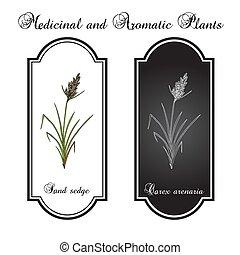 medicinaal, zegge, carex, zand, arenaria, plant