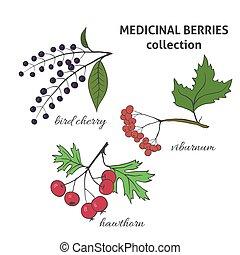 Medicinal berry collection. Bird cherry, viburnum, hawthorn. Health and nature set.