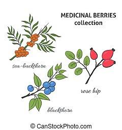 Medicinal berry collection. Blackthorn,  sea-buckthorn, rose hip. Health and nature set.