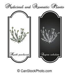 medicinal, brejo, planta, pearlwort, ou, subulata, sagina, ...