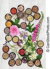 Medicinal Herbs and Flowers - Medicinal flower and herb...