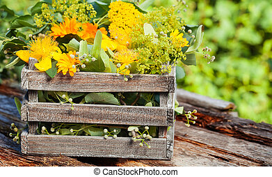 Medicinal herbs, medicinal plants in wooden box for Homeopathy