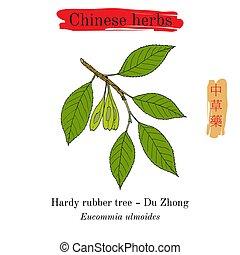 Medicinal herbs of China. Hardy rubber tree Eucommia...