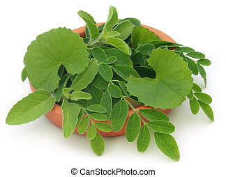 Medicinal herbs on clay pot over white background