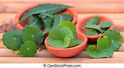 Medicinal herbs on bamboo surface