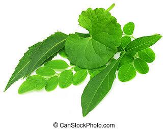 Medicinal herbs - thankuni, neem, moringa and vitex negundo