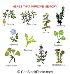 Medicinal herbs that improve memory