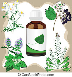 medicinal herbs with bottle, vector