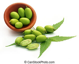 Medicinal neem fruits over white background