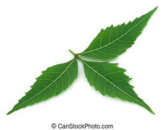 Medicinal neem leaf
