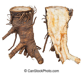 Medicinal plant: Angelica root