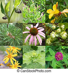 Medicinal plants - Collage of different medicinal plants