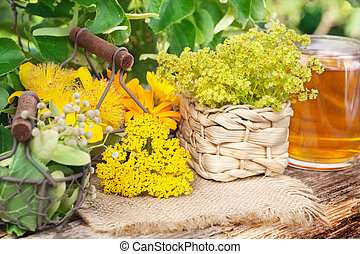Medicinal plants, gathered medicinal herbs, herbal tea