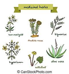 Vector set of medicinal plants. Hand drawn botanical vector illustration