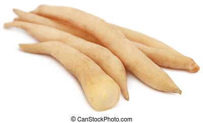 Medicinal Shatavari of Indian subcontinent - Asparagus...