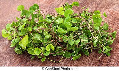 medicinal, thankuni, hojas