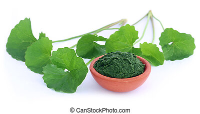 Medicinal thankuni leaves - Fresh and crushed medicinal...