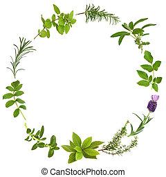 medicinale, e, culinario, erba, foglie