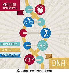 medicinsk, infographic, dna.