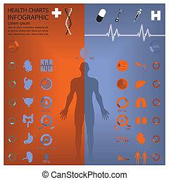 medicinsk, infographic, hälsa, infochart