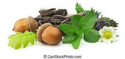 medicinska växter