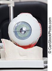 medico, occhio, modello