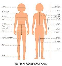 medidas, gráfico, tamaño, cuerpo