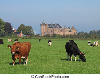 Medieval castle and grazing cows - Grazing cows in the lush ...
