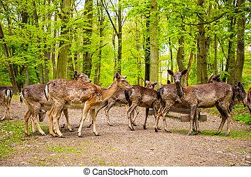 medieval, tcheco, primavera, deers, tempo, república, blatna, castelo, território