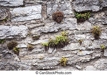 Medieval wall made from stones