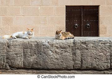 Medina Wall with Cats (1)