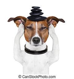 meditación, perro
