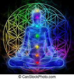 meditación, vida, -, flor