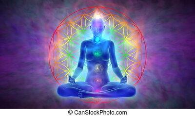 meditatie, bloem, -, leven