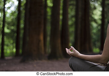 Meditating in a Pine Forest - Woman sitting in lotus...