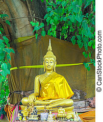 Meditation Buddha statue. Under the Bodhi tree