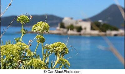 Mediteranian plants