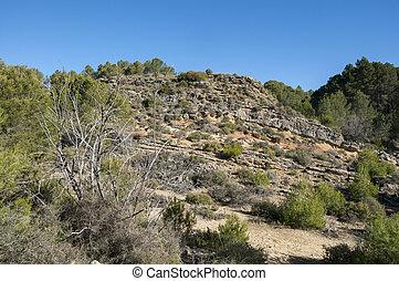 mediterráneo, shrublands