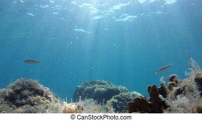 mediterranean fish - unserwather footage of Mediterranean...