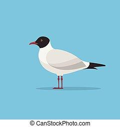Mediterranean Gull. Seagull vector illustration. Flat style gull seabird.