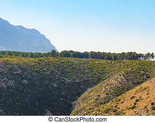 Mediterranean hills with trees
