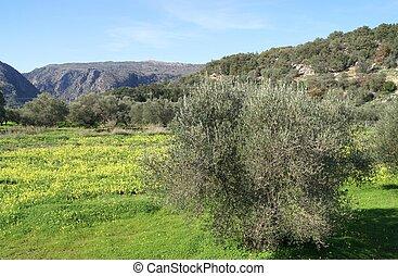 Mediterranean Landscape in Spring