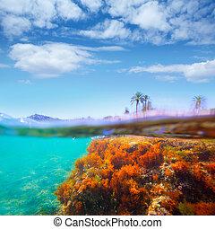 Mediterranean underwater seaweed Denia Alicante spain -...