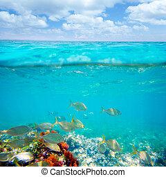 Mediterranean underwater with salema fish school in spain