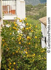 Mediterranean village - Detail take of whitewashed houses...